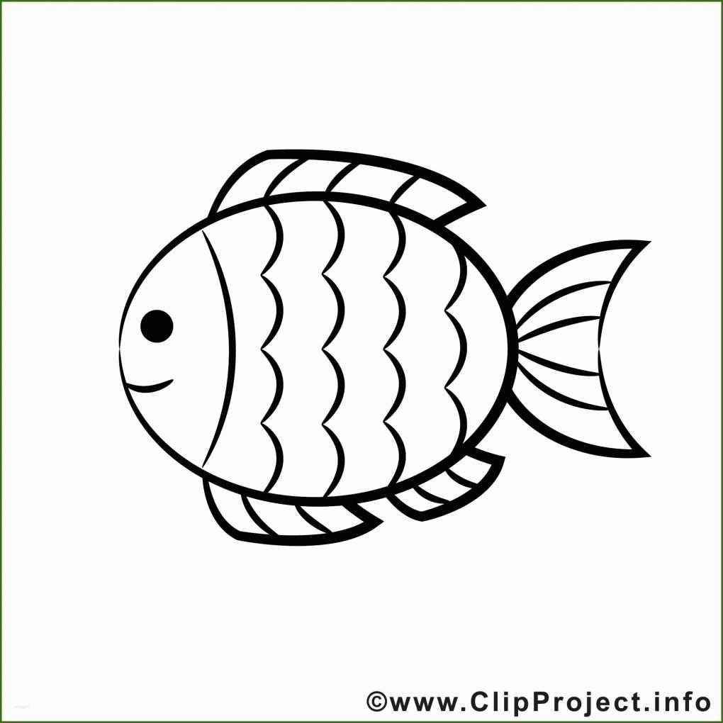 faszinieren fisch malvorlage  vorlage ideen für 20192020