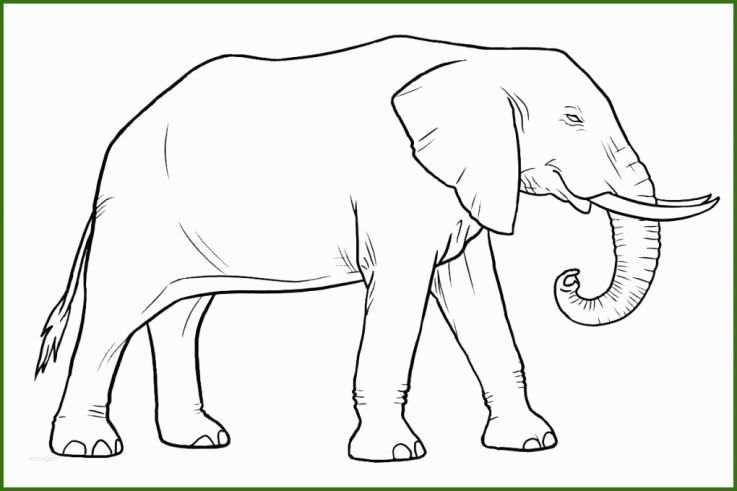 neue version elefanten malvorlagen kostenlos zum
